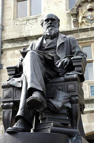 Notable Photograph - Charles Darwin by Cordelia Molloy