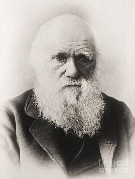 Evolution Photograph - Charles Darwin by English School