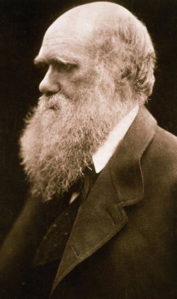 Creationism Wall Art - Photograph - Charles Darwin by Julia Margaret Cameron