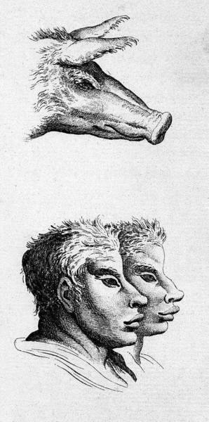 Wall Art - Photograph - Charles Le Brun's System On Physiognomy by Thierry Berrod, Mona Lisa Production/ Science Photo Library