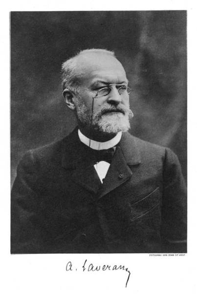 Wall Art - Photograph - Charles-louis-alphonse Laveran  French by Mary Evans Picture Library