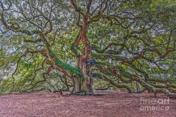 Photograph - Charleston Angel Oak by Dale Powell