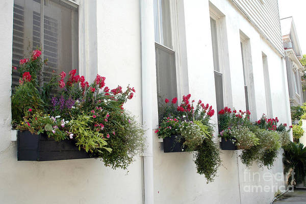 Rainbow Row Photograph - Charleston French Quarter Historic District Dreamy Flowers Window Boxes  by Kathy Fornal