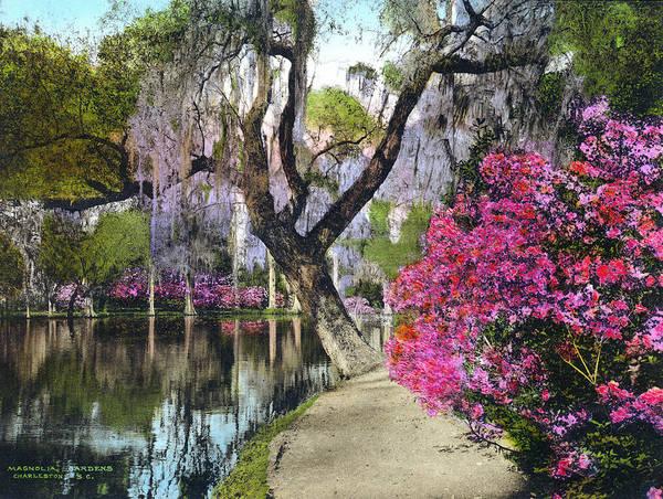 Wall Art - Photograph - Charleston Magnolias by Granger