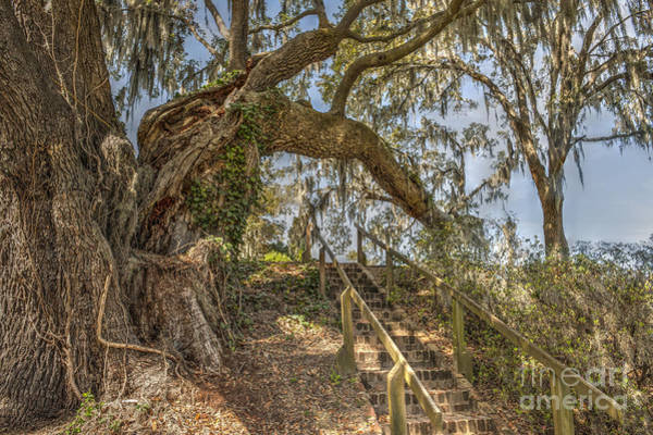 Photograph - Charleston Oak Stairway by Dale Powell