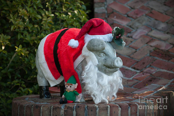 Photograph - Charleston Pig by Dale Powell