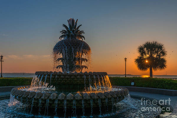 Photograph - Charleston Pineapple by Dale Powell