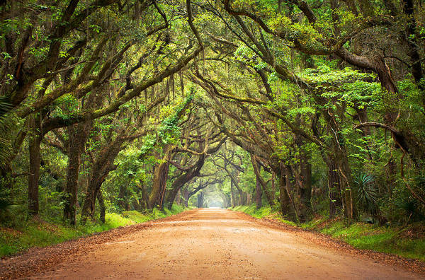 Oak Photograph - Charleston Sc Edisto Island - Botany Bay Road by Dave Allen