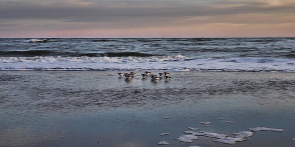 Photograph - Charleston Shore Birds by Evie Carrier