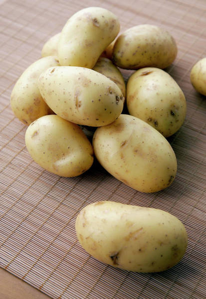Tubers Photograph - Charlotte Potatoes by Claudia Dulak / Science Photo Library