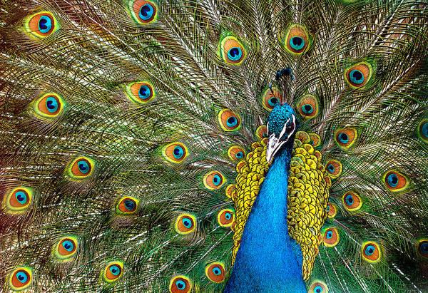 Plume Photograph - Charming by Ivan Vukelic