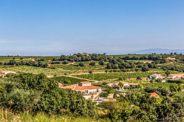 Chateauneuf Photograph - Chateauneuf Du Pape by Anita Miller