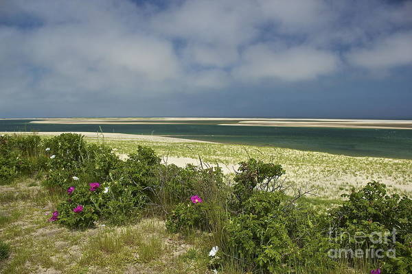 Photograph - Chatham Beach In Bloom by Amazing Jules