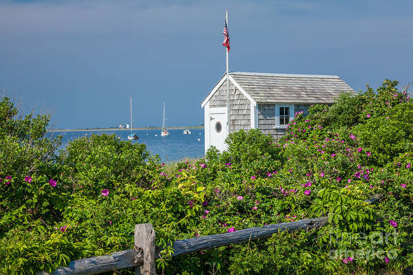 Photograph - Chatham Rose View by Susan Cole Kelly