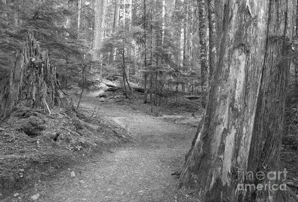 Photograph - Cheakamus Trail In Black And White by Adam Jewell