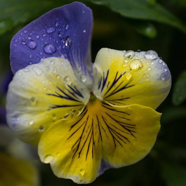 Photograph - Cheerfuly Wet  by Georgia Mizuleva