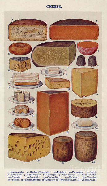 Vintage Books Wall Art - Drawing - Cheese 1900s Uk Isabella Beeton  Mrs by The Advertising Archives