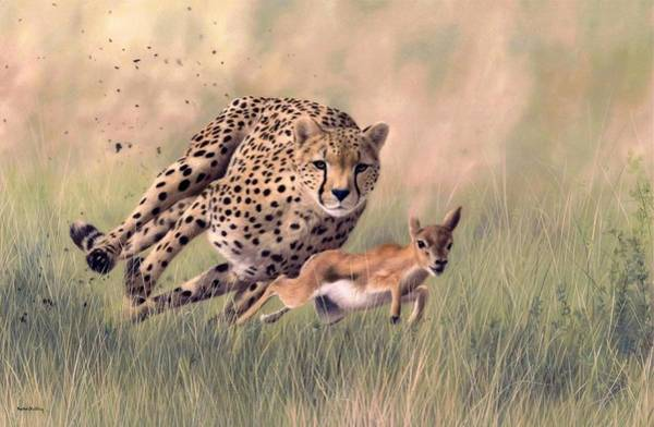 Cheetah Painting - Cheetah And Gazelle Painting by Rachel Stribbling