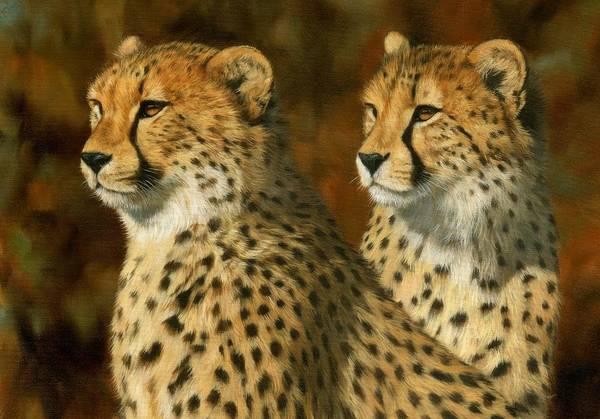Wall Art - Painting - Cheetah Brothers by David Stribbling
