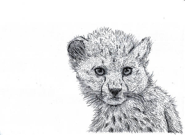 Wall Art - Drawing - Cheetah Cub by Karl Addison