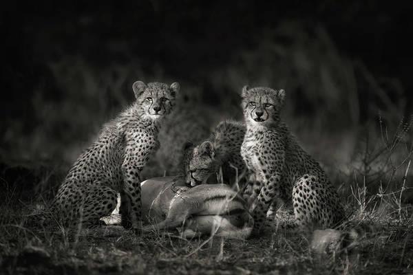 Cheetah Cubs Art Print by Mario Moreno