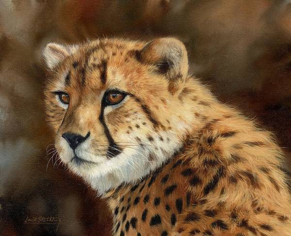 Big Cat Wall Art - Painting - Cheetah by David Stribbling
