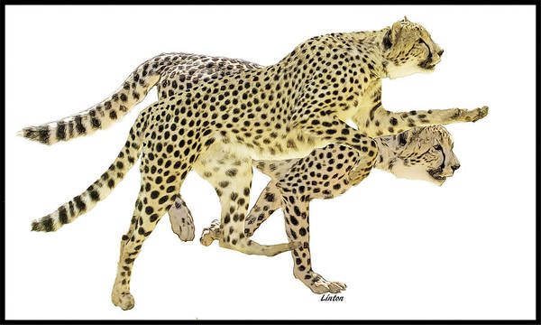 Digital Art - Cheetahs by Larry Linton