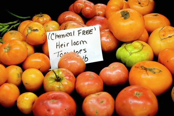 State Of Indiana Photograph - Chemical-free Tomatoes by Jim West
