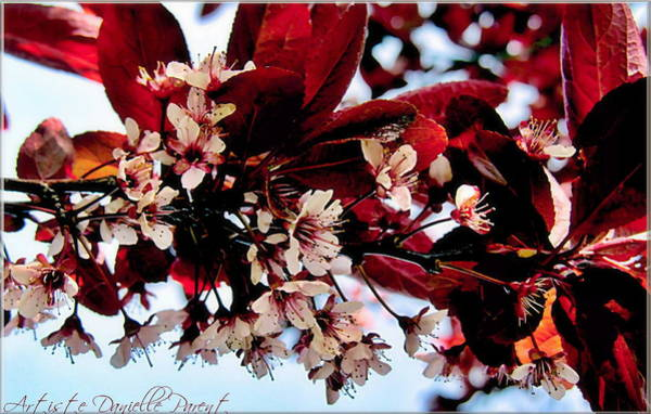Photograph - Cherry Blosoms 2 by Danielle  Parent