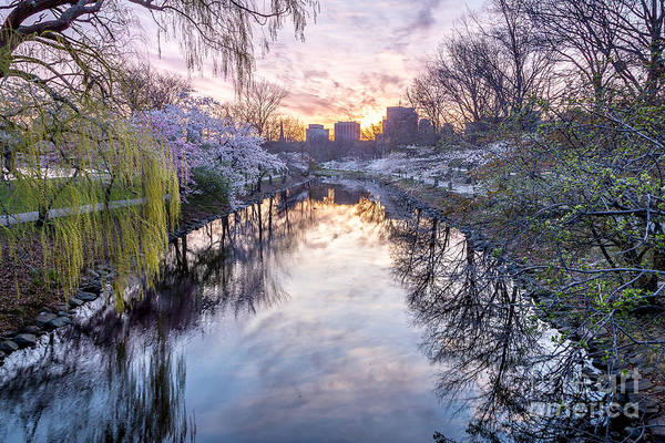 Photograph - Cherry Blossom Lagoon by Susan Cole Kelly
