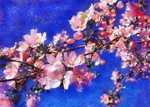 Photograph - Cherry Blossom On Blue by Charmaine Zoe