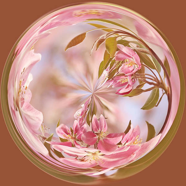 Photograph - Cherry Blossom Orb by Kim Hojnacki