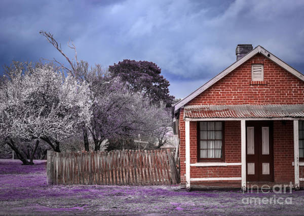 Photograph - Cherry Blossom by Russell Brown