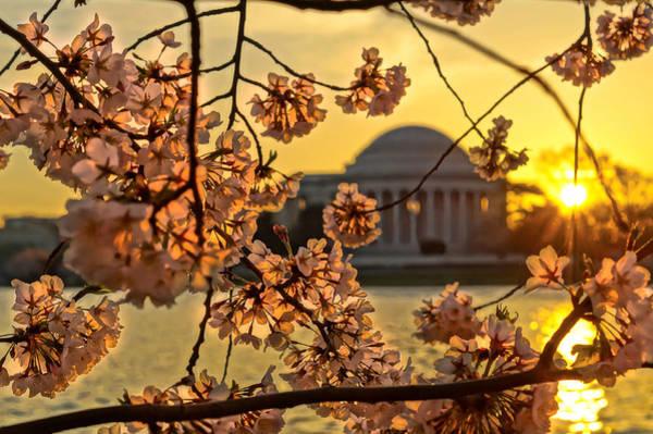 Politicians Wall Art - Photograph - Cherry Blossom Sunrise  by Sarah Ferrante