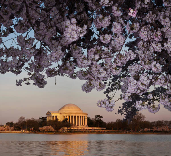 Wall Art - Photograph - Cherry Blossom Tree With A Memorial by Panoramic Images