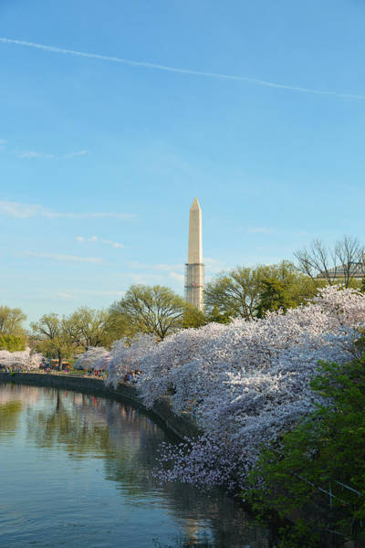 Photograph - Cherry Blossoms 2013 - 040 by Metro DC Photography