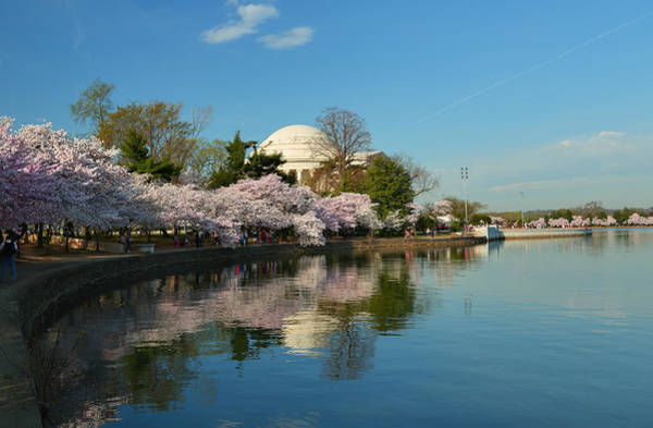 Photograph - Cherry Blossoms 2013 - 041 by Metro DC Photography
