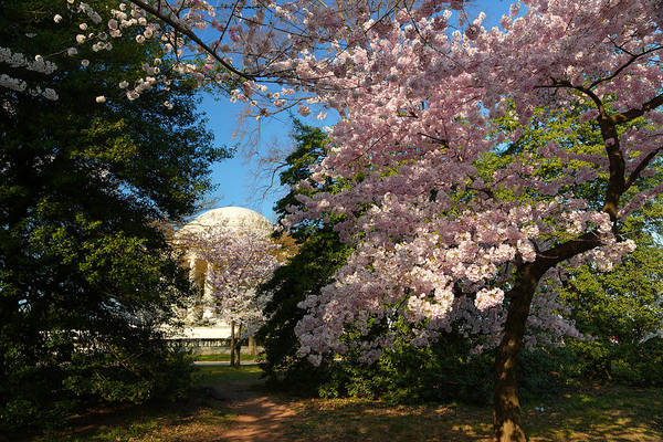 Photograph - Cherry Blossoms 2013 - 047 by Metro DC Photography