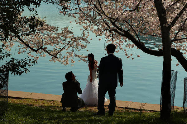 Photograph - Cherry Blossoms 2013 - 054 by Metro DC Photography