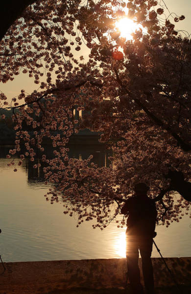 Photograph - Cherry Blossoms 2013 - 061 by Metro DC Photography