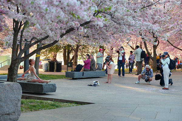 Photograph - Cherry Blossoms 2013 - 069 by Metro DC Photography