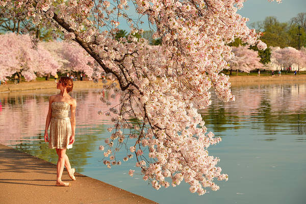 Photograph - Cherry Blossoms 2013 - 078 by Metro DC Photography