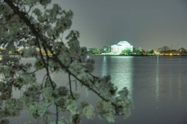 Photograph - Cherry Blossoms 2013 - 102 by Metro DC Photography