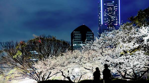 Kanagawa Wall Art - Photograph - Cherry Blossoms At Night by Kuroaya