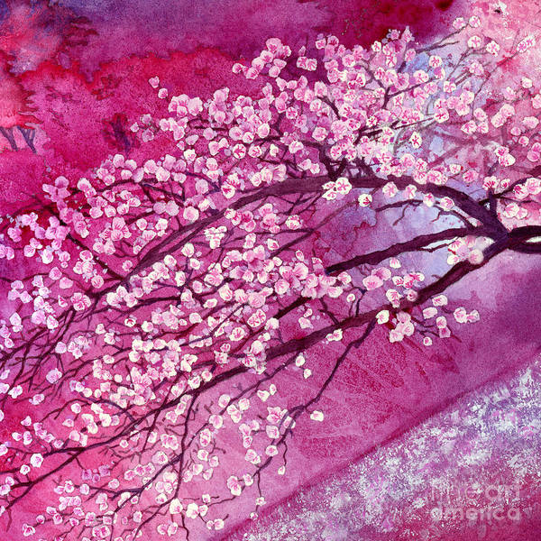 Pink Blossom Painting - Cherry Blossoms by Hailey E Herrera