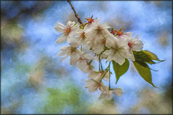 Photograph - Cherry Blossoms In Oil by Erika Fawcett
