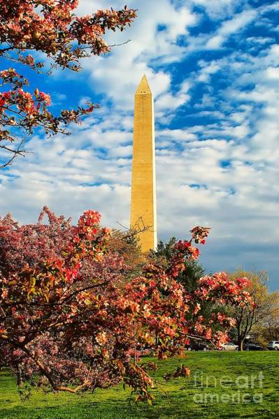 Photograph - Cherry Blossoms In Washington by Nick Zelinsky