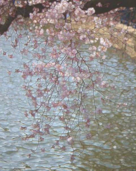 Painting - Cherry Blossoms P2 by John Feiser