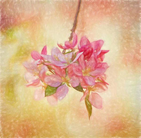 Photograph - Cherry Jubilee by Kim Hojnacki