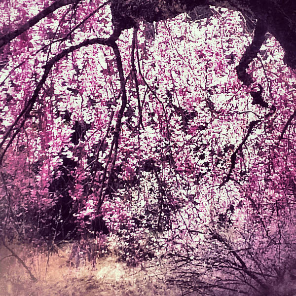 Photograph - Cherry Pink by Yen